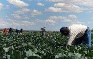 Los trabajadores agrícolas necesitan que los inspectores estén capacitados