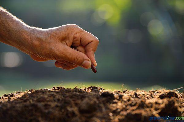 Integra STPS una sola NOM en materia de Seguridad y Salud para labores agrícolas