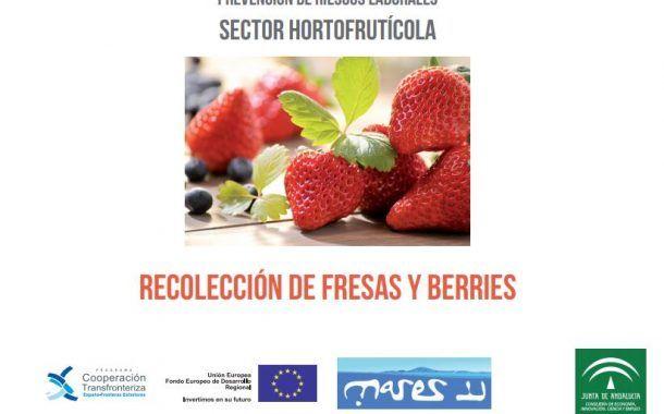 ¡Descarga! Los riesgos en la recolección de fresas y otros frutos