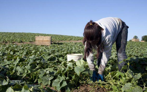 """""""Campos de Esperanza"""", contra el trabajo infantil en el campo"""
