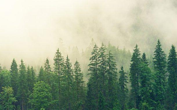 El olor característico de los árboles de navidad
